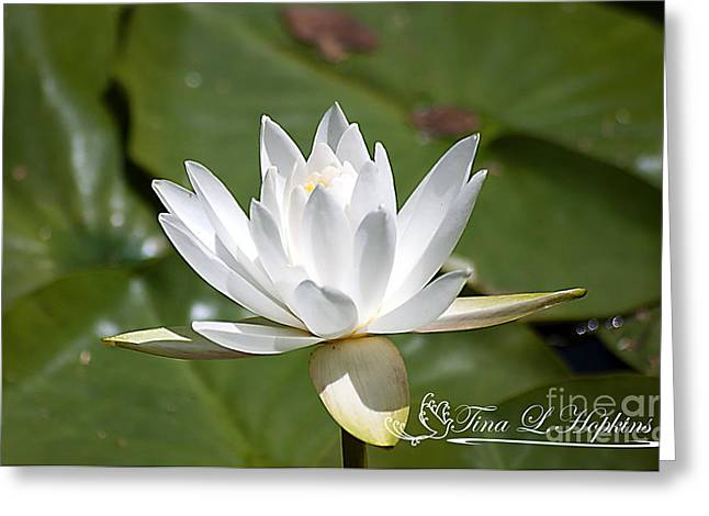 Greeting Card featuring the photograph Water Lily 20120627_34a by Tina Hopkins
