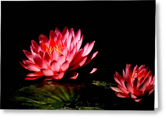 Water Lily 5 Greeting Card