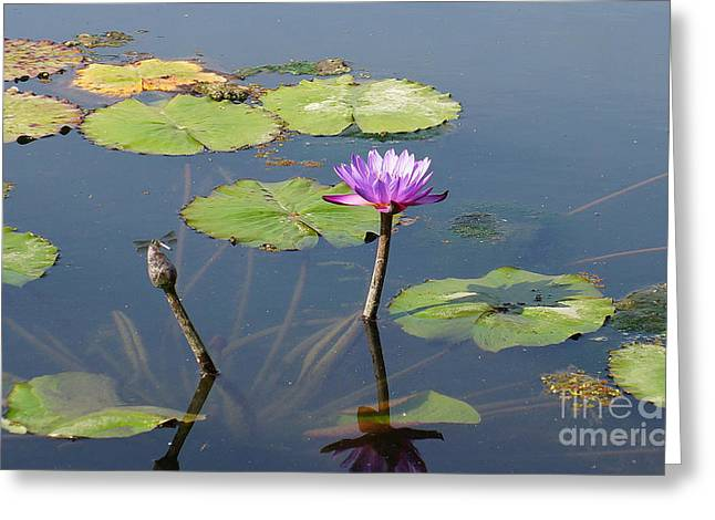 Water Lily And Dragon Fly One Greeting Card