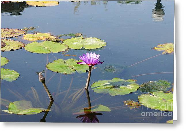 Water Lily And Dragon Fly Two Greeting Card