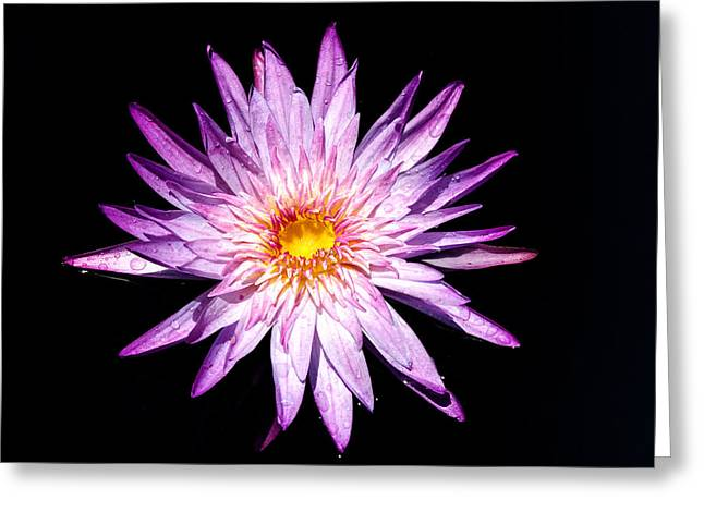 Water Lily. Greeting Card