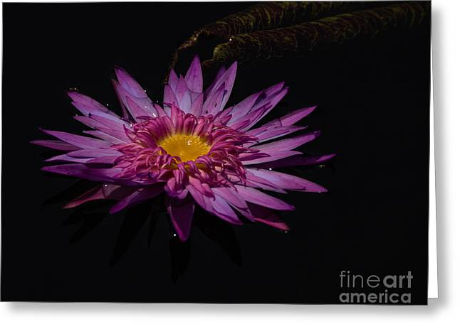 Water Lily I Greeting Card by Ursula Lawrence
