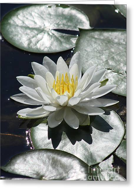 Greeting Card featuring the photograph Water Lily II by Anita Oakley