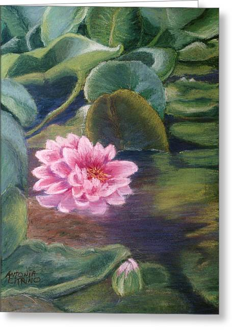 Greeting Card featuring the pastel Water Lily In Bloom  Pastel by Antonia Citrino