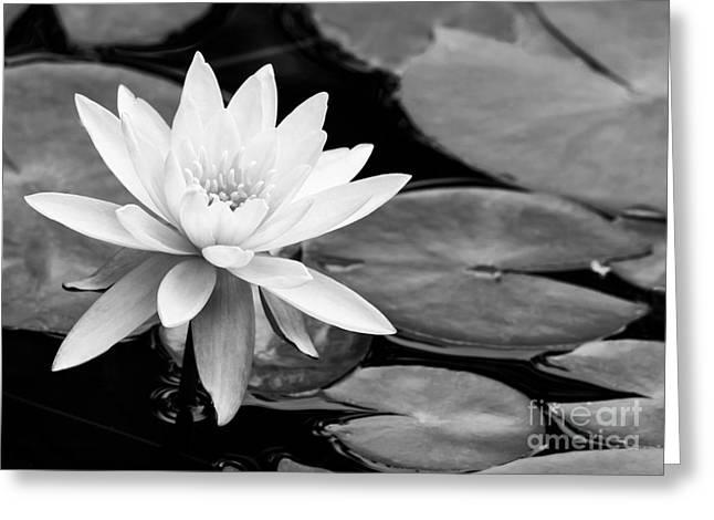 Water Lily In The Lily Pond Greeting Card by Sabrina L Ryan