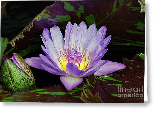 Water Lily Leopardess Greeting Card