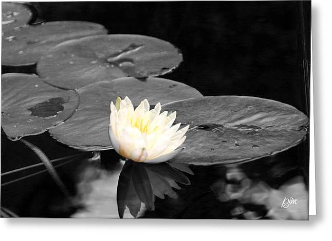 Greeting Card featuring the photograph Water Lily by Phil Mancuso