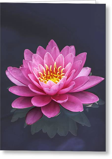 Water Lily Reflected Greeting Card by John Haldane