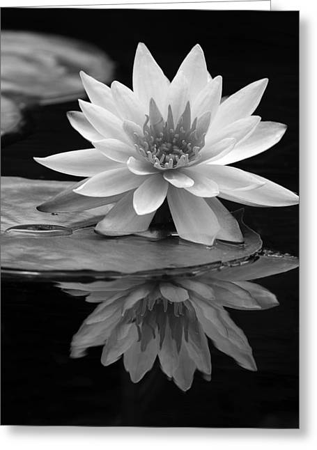 Water Lily Reflections I Greeting Card by Dawn Currie