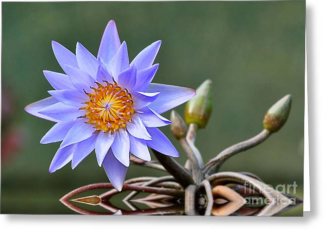 Greeting Card featuring the photograph Water Lily Reflections by Kathy Baccari