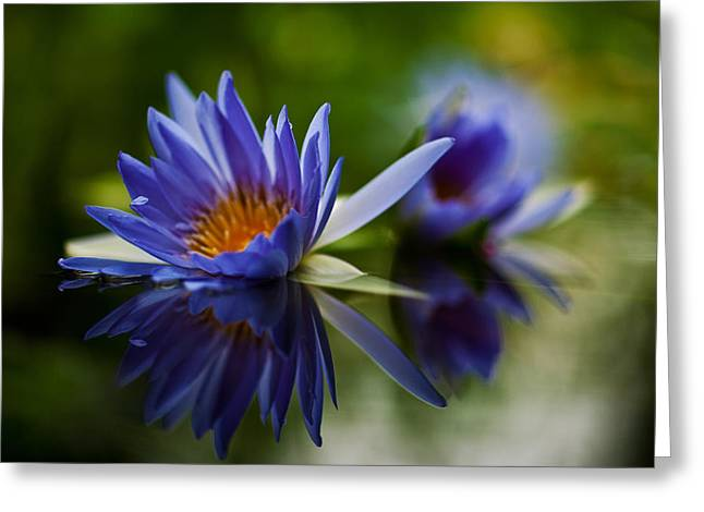 Water Lily Reflections Greeting Card by Mike Reid