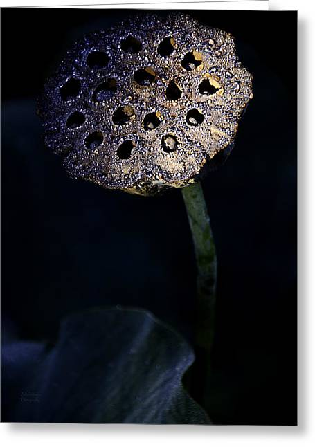 Water Lily Seed Pod Greeting Card