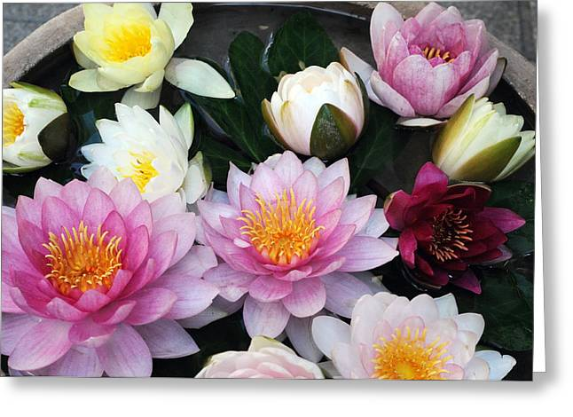 Greeting Card featuring the photograph Water Lily Series -2  by Haleh Mahbod