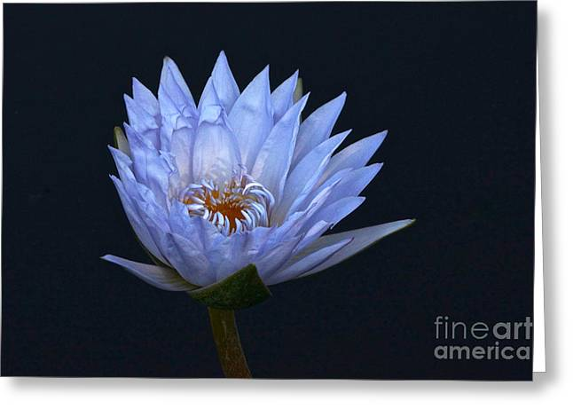 Water Lily Shades Of Blue And Lavender Greeting Card
