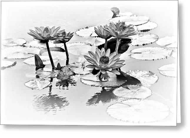 Water Lily Study - Bw Greeting Card by Nikolyn McDonald
