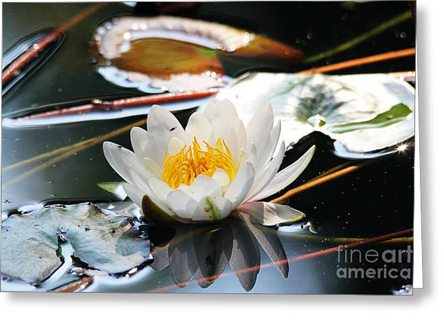Greeting Card featuring the photograph Water Lily by Trina  Ansel