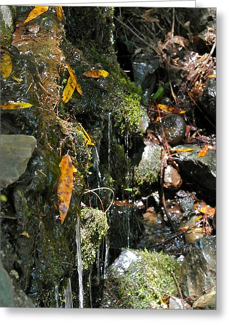 Greeting Card featuring the photograph Water Of Life by Michele Myers