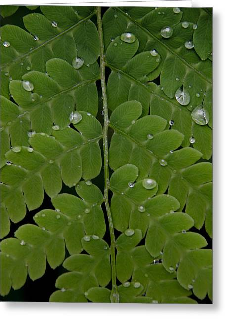 Water On Fern  Greeting Card