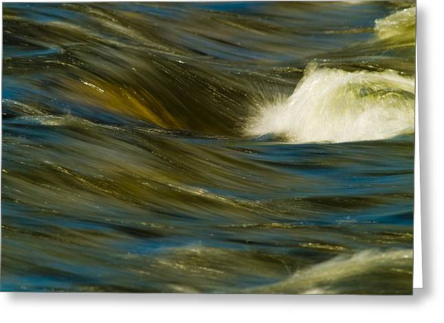 Water Play Greeting Card by Bill Gallagher