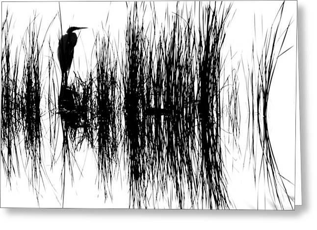 Water Reeds Greeting Card by Dick Botkin