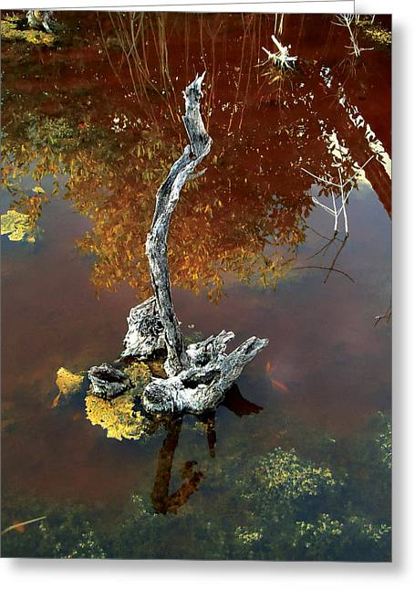 Water Stick Greeting Card by Mike Feraco