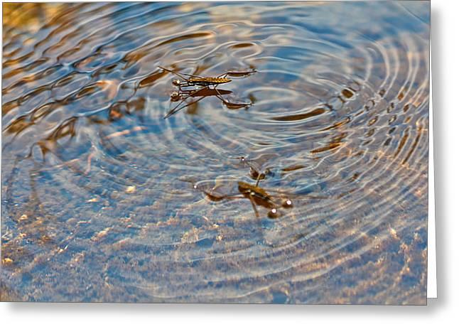 Waterbugs Greeting Card