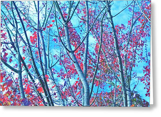 Greeting Card featuring the photograph Watercolor Autumn Trees by Tikvah's Hope