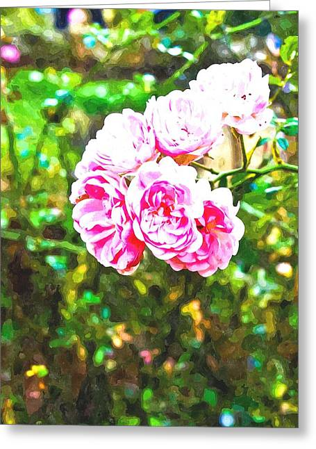 Watercolor Of Pink Fairy Roses In Nature Greeting Card by Ammar Mas-oo-di