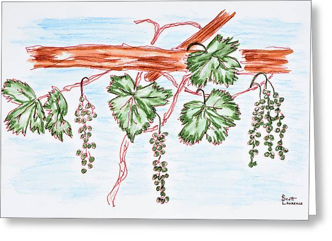 Watercolor Of Vines With Grapes, France Greeting Card