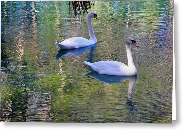 Watercolor Swans Greeting Card