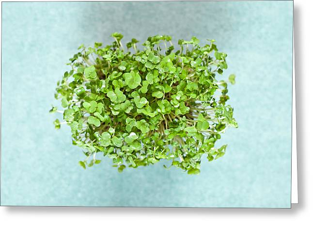Watercress Greeting Card by Tom Gowanlock