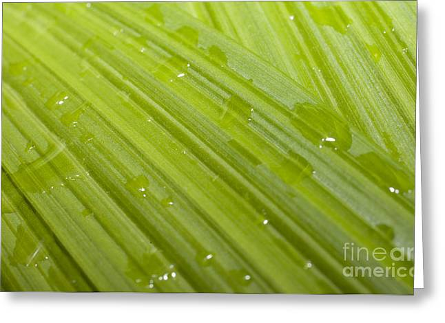 Waterdrops On A Leaf Greeting Card by Jonathan Welch