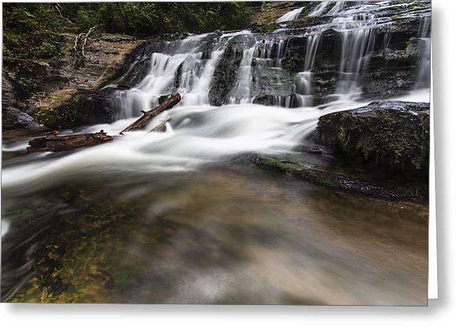 Watered Log Greeting Card by Bill Cantey