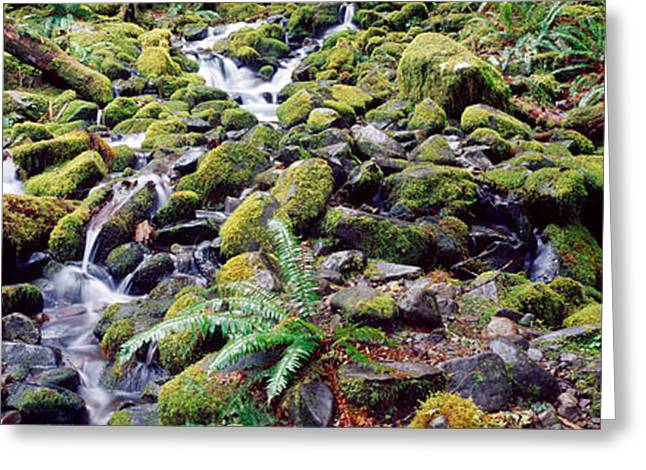 Waterfall In A Forest, Olympic National Greeting Card