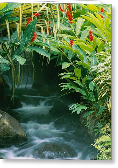 Waterfall In A Forest, Tabacon, Costa Greeting Card