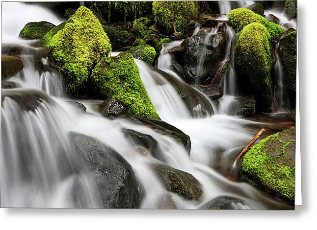 Waterfall Olympic National Park Greeting Card by Tom Norring