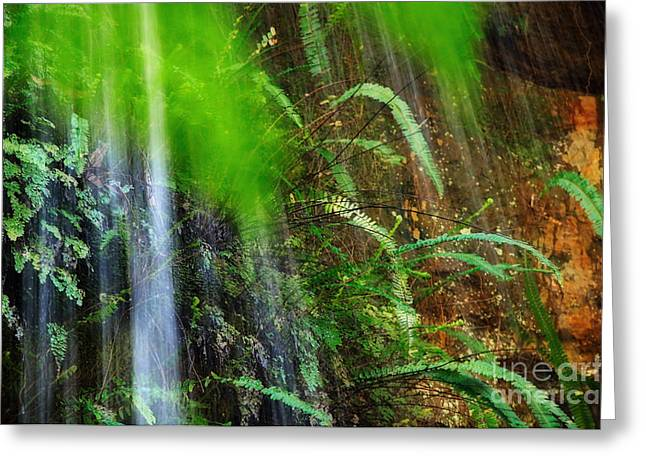 Waterfall Over Ferns Greeting Card by Kaye Menner