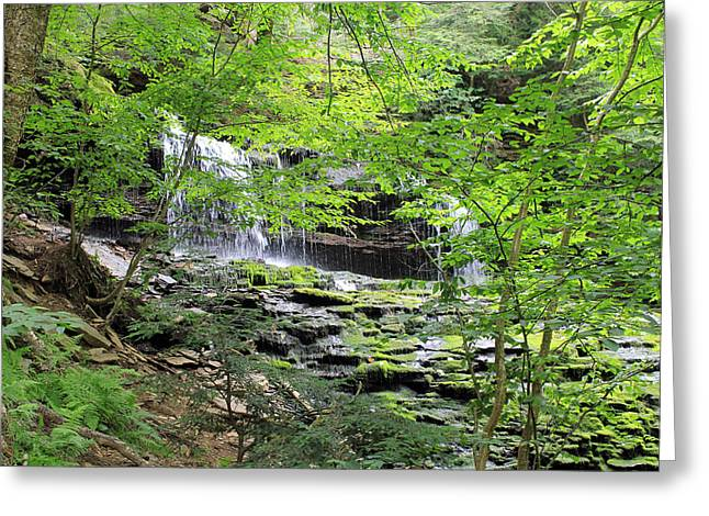 Waterfall Ricketts Glen State Park Pa Greeting Card