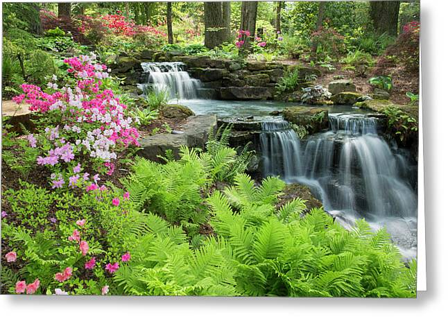 Waterfall With Ferns And Azaleas Greeting Card