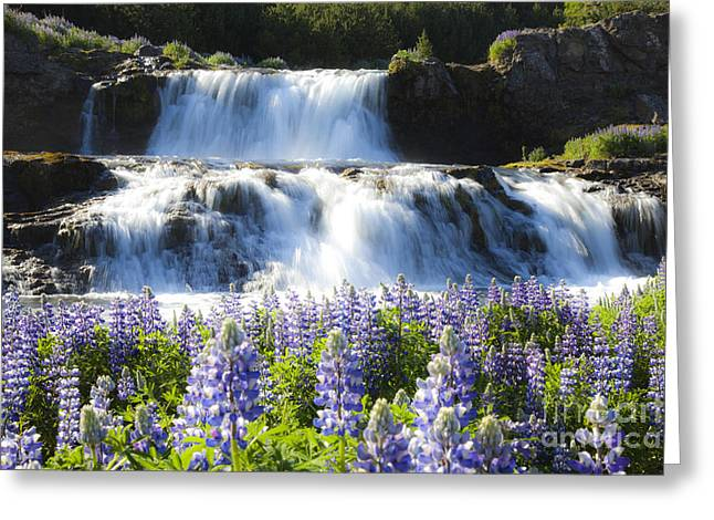 Waterfall With Flowers Greeting Card