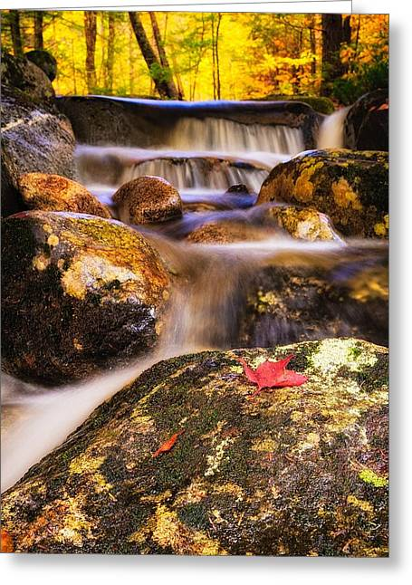 Waterfall With Red Maple Leaf. Greeting Card by Jeff Sinon