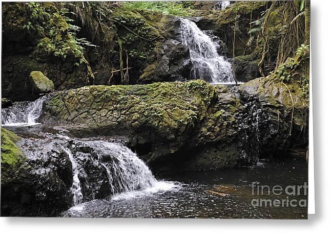 Waterfalls In Nature Greeting Card