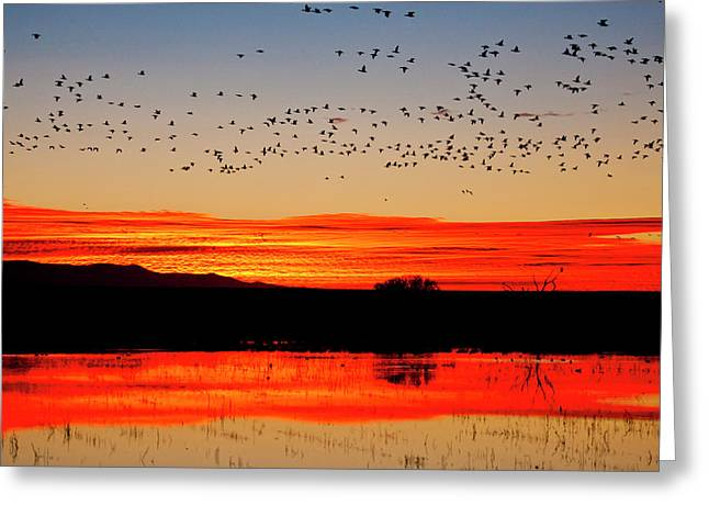 Waterfowl On Roost At Sunrise, Bosque Greeting Card