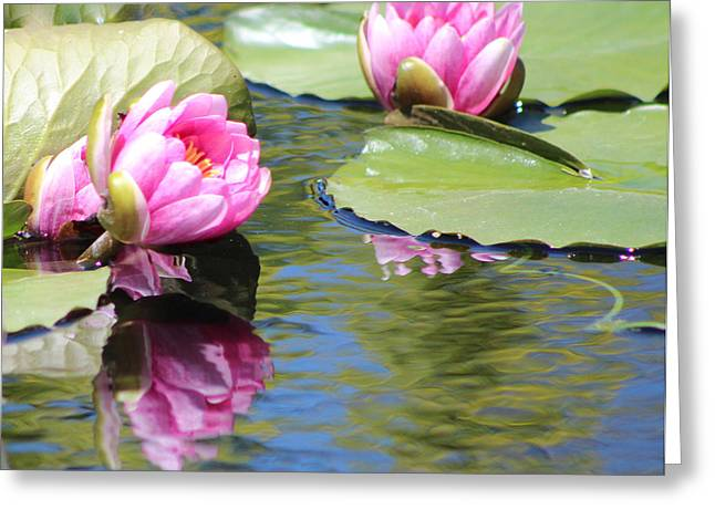 Watergarden Lotus Greeting Card by Debra     Vatalaro