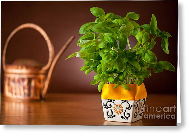 Ocimum Basil Plant In Decorative Flowerpot  Greeting Card by Arletta Cwalina
