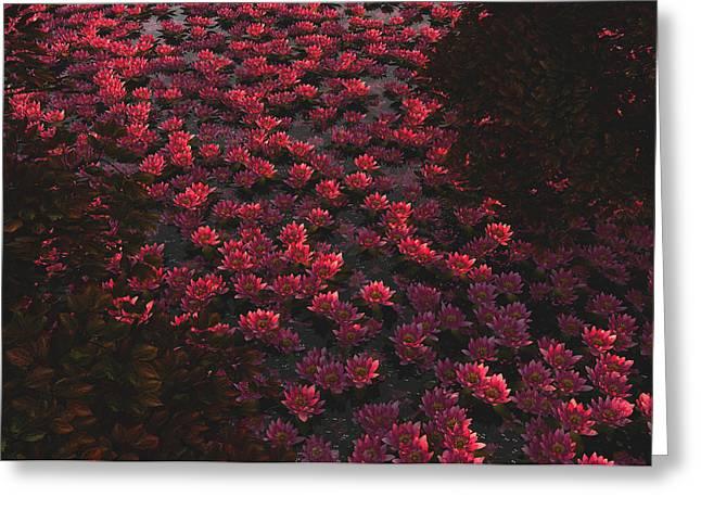 Waterlilies 2 Greeting Card