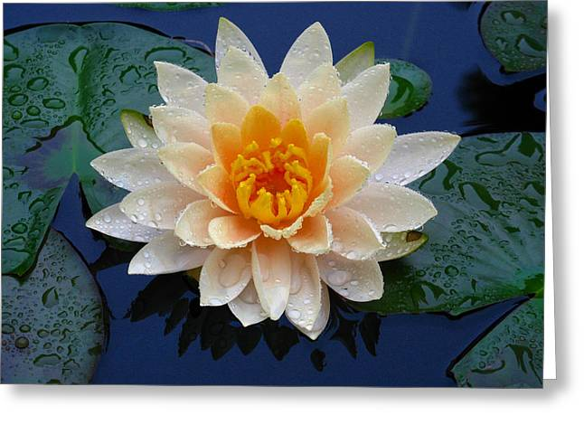 Greeting Card featuring the photograph Waterlily After A Shower by Raymond Salani III