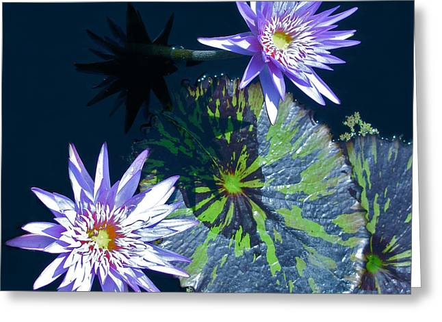 Waterlily And Pads Greeting Card by Debra     Vatalaro