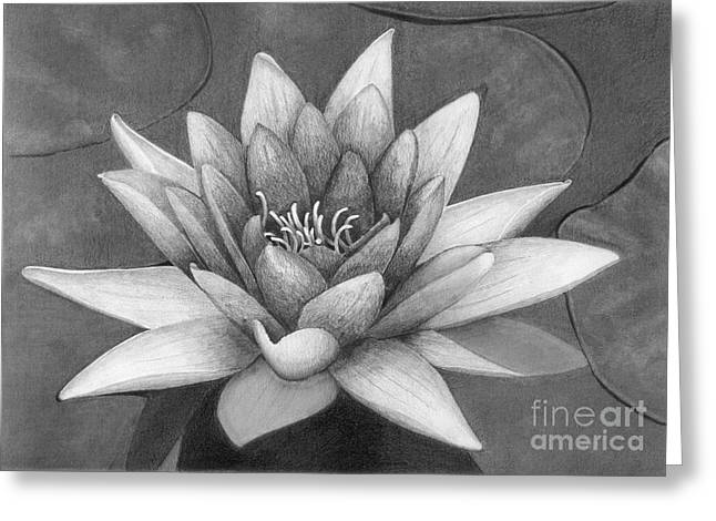 Waterlily Greeting Card by Nicola Butt