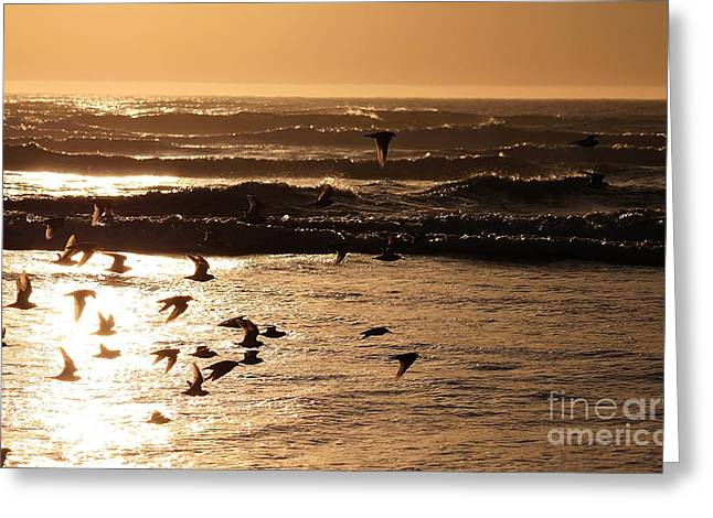 Waves And Wings Greeting Card